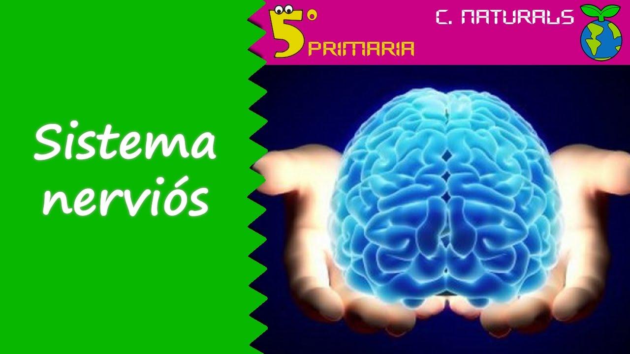 Sistema nerviós. Naturals, 5é Primària. Tema 5
