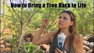 How to Bring a Tree Back to Life