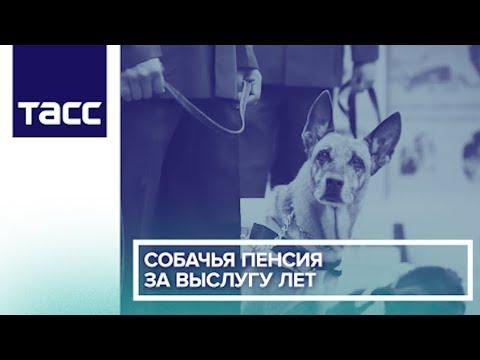 Собачья пенсия за выслугу лет