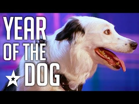 Celebrating THE BEST DOG AUDITIONS and TRICKS EVER  On Got Talent From Around The World (видео)