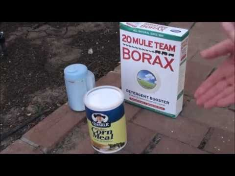 Video How To Get Rid of Ants Naturally (3 Ways To Kills Ants)