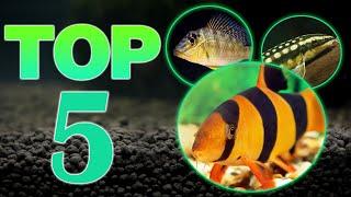 Top 5 Bottom Dweller Freshwater Fish