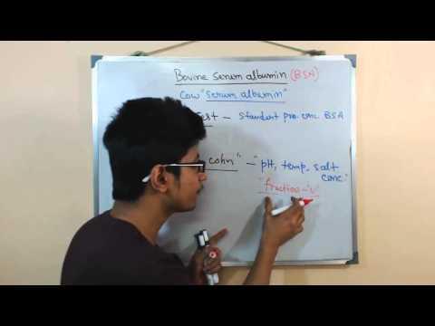Bovine serum albumin | BSA protein