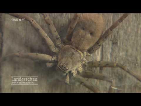 Der Spinnenfänger von Lörrach