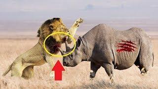 Лев Против Носорога, Гигантский Удав Против Коровы | Реальные Битвы Диких Животных