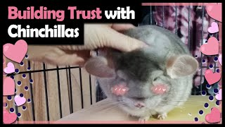 HOW TO TAME A CHINCHILLA   THIS METHOD REALLY WORKS!   This is How I Bonded with My New Chinchilla!