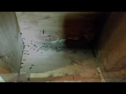 A homeowner in Howell, NJ contacted Cowleys after finding a large number of ants in his basement. As we began...