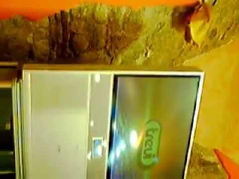 Scoliosis 2 gradi di una fotografia.