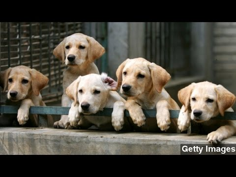 Surprising Ways Your Pet Could Get You A Tax Deduction