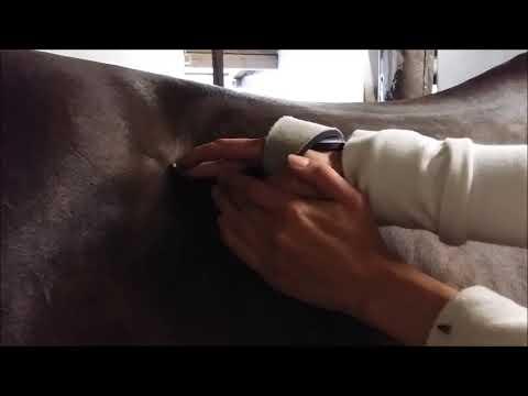 Injektionen mit Hyaluronsäure zur Behandlung eines Gelenkes
