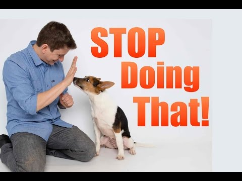 How To Correct Your Dog's BAD Behavior!