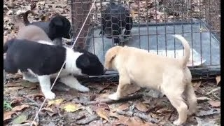 PUPPY rescue from FERAL mama dog