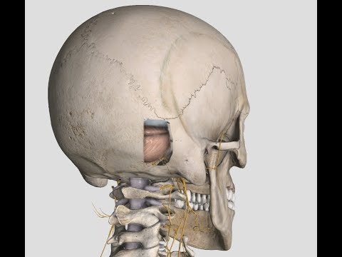 Complete anatomy apk mod