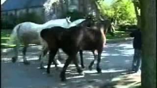 The Carriage Tour Horses on Mackinac Island