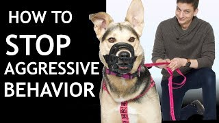 How To Train Your Dog To STOP SNAPPING at People (Stop Aggressive/Reactive Behavior)