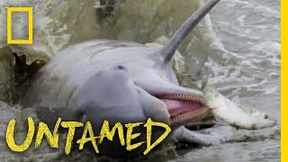 Dolphins Will Feast and Fish Will Fly: Ep. 2 | Untamed with Filipe DeAndrade