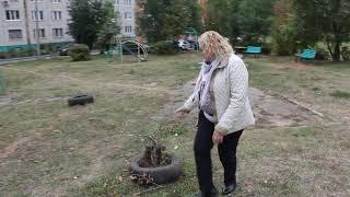 Неизвестные сломали молодые деревья во дворе дома в Чебоксарах
