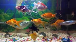 Tips to Keep Your Fish Happy, Healthy : home aquarium maintenance, snail eggs Fish Tank Aquarium Fis