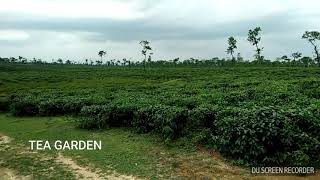 preview picture of video 'TEA GARDEN, HABIGANJ, SREEMONGAL, SYLHET'