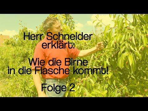 Herr Schneider erklärt: Wie die Birne in die Flasche kommt!