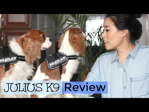 Julius K9 Harness Review | No Pull Harness | Herky The Cavalier King Charles Spaniel