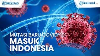 Mutasi Covid-19 dari India dan Afrika Masuk Indonesia, Lebih Berbahaya dan Tingkat Penularaan Tinggi