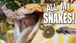 FEEDING TONS OF SNAKES AT MY REPTILE ZOO!! | BRIAN BARCZYK