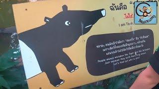 Зоопарк в Бангкоке, Манкиту на прогулке, лодка автобус. МанкиТайм в Таиланде