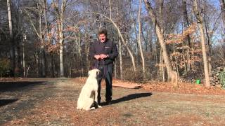 preview picture of video 'Winston Salem Dog Training | American Bulldog Puppy Training - Two Jay'