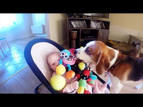 Il cane le ruba il giocattolo ma poi si pente