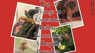 Top 5 Things To Consider Before Becoming A Reptile Breeder