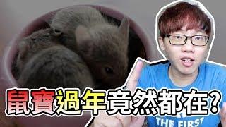 【維鼠日記】鼠寶寶過年都在做什麼?!【維特】#08 |Baby rats life in Chinese New Year