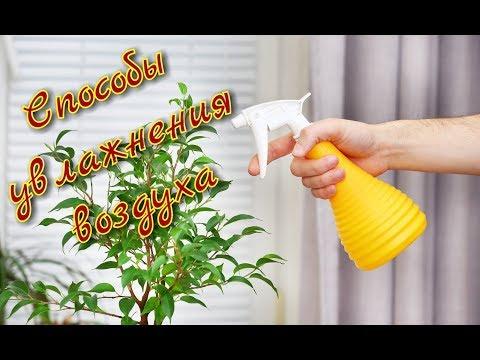 Способы увлажнения воздуха для растений