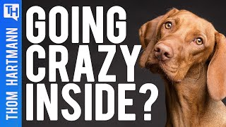 What Dogs & Geese Can Teach Us About Staying Sane During Quarantine