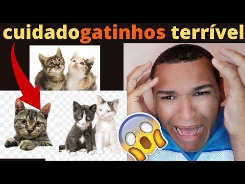 GATOS FOFOS ! GATINHOS FOFOS , GATOS FOFOS FILHOTES? GATOS FOFOS!!