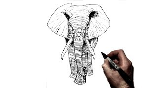 How To Draw An Elephant | Step By Step