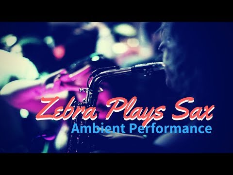 Zebra Plays Saxophone Video