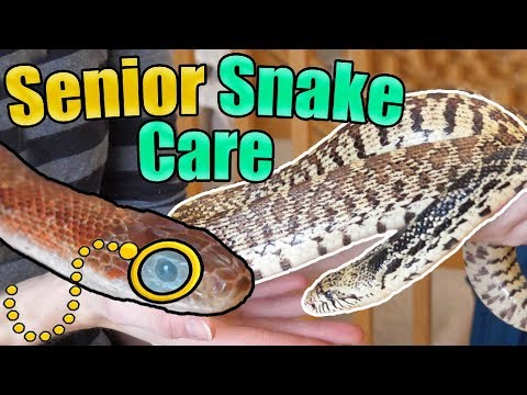 How To Identify And Care For Older Snakes Mp3