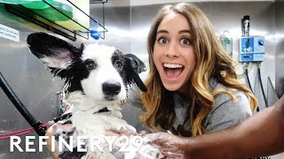 I Learned How To Be A Professional Dog Groomer | Lucie For Hire | Refinery29