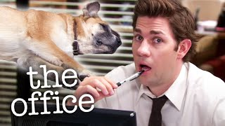 Kevin's Dog Doesn't Do Anything  - The Office US