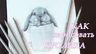 Как нарисовать кролика карандашами Уроки рисования How to draw a rabbit