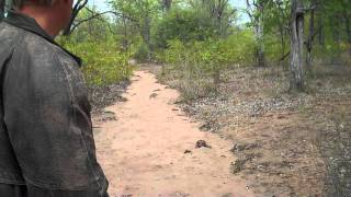 Adventurebug breaks into the Limpopo Trans Frontier national Park MOZAMBQUIE