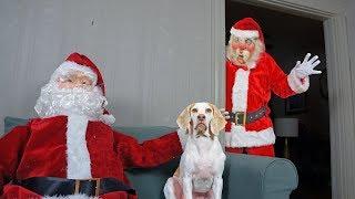Dogs vs Good/Bad Santa Prank: Funny Dogs Maymo, Penny & Potpie