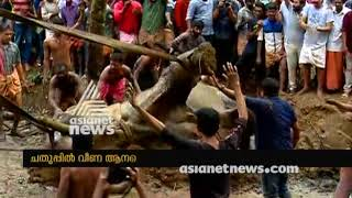 Elephant stuck in mud at Pathanamthitta, rescued