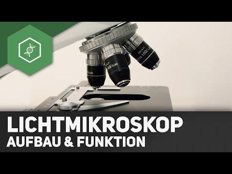 Das Lichtmikroskop – Aufbau und Funktion