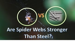 Are Spider Webs Actually Stronger Than Steel?   Experiment