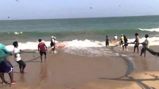 preview picture of video '2)Тянем потянем вытащили рыбку! Tangalle Sri Lanka_TatiLanka_Танюшка Курчина_02.01.2013'