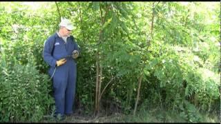 Basal Bark Herbicide Application