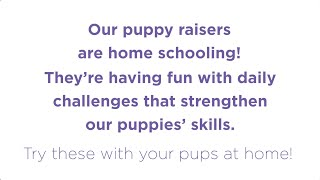Our Puppy Raisers are Home Schooling!