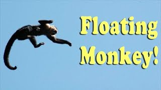 Making a Monkey Levitate